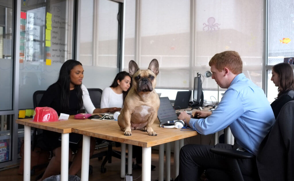 interns at work with frenchie dog